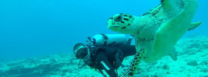 Best Caribbean Dive Sites