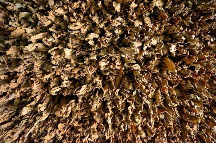 tobacco vinales cuba