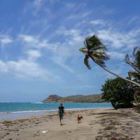 5 Months of Living in the Caribbean - Grenada in Photos
