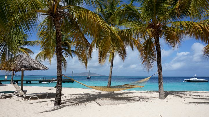 palm island hammock SVG