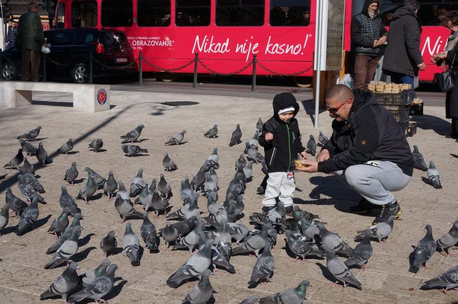 Boy Feeds Pigeons in Sarajevo
