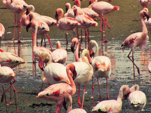 travel to namibia flamingos