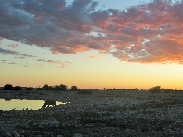 travel to namibia game park