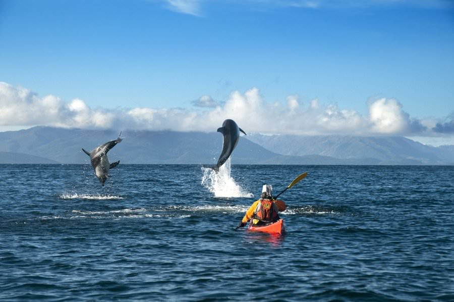 kayaking with dolphins in chile