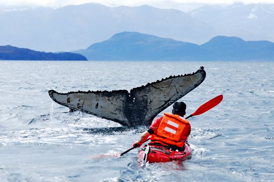 kayaking with whales in chile