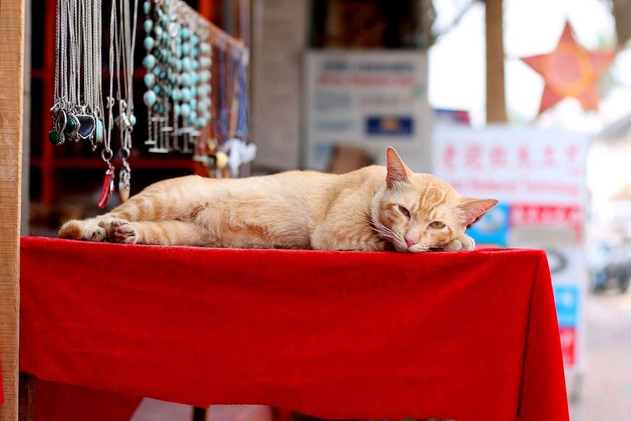 shopping, Luang Prabang