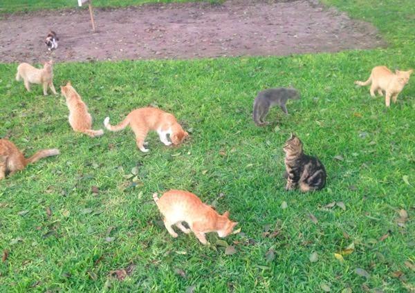 cat-park