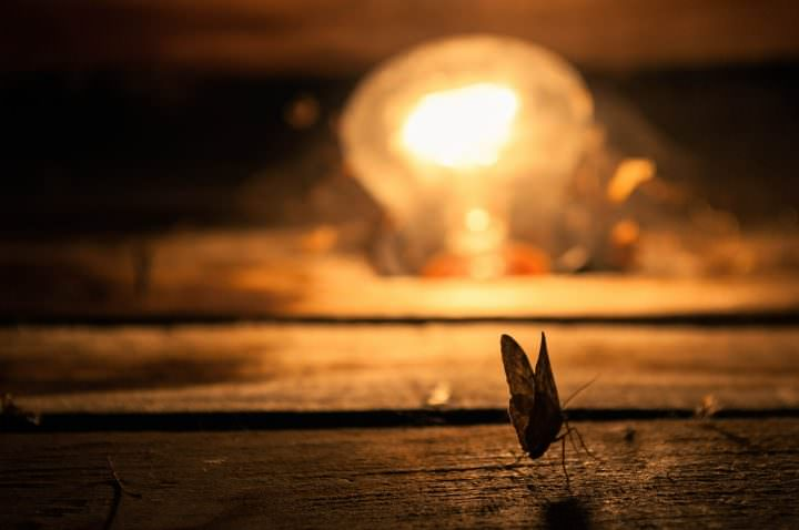 Moth and light