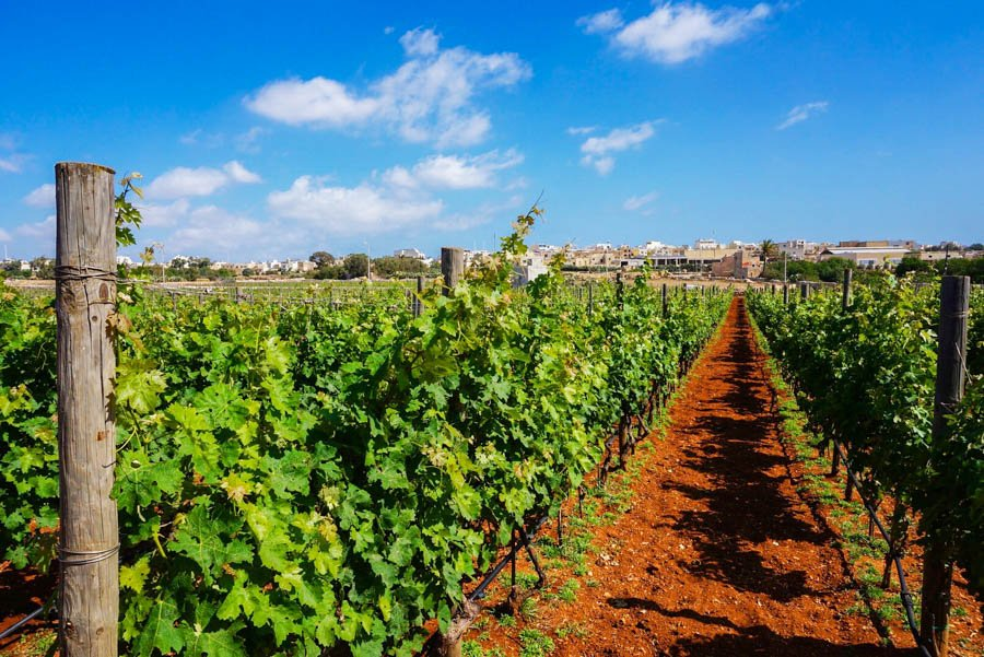 travel to malta visit the marsovin estate winery