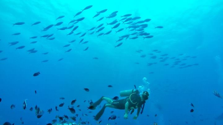 ten things to do in the gills dive