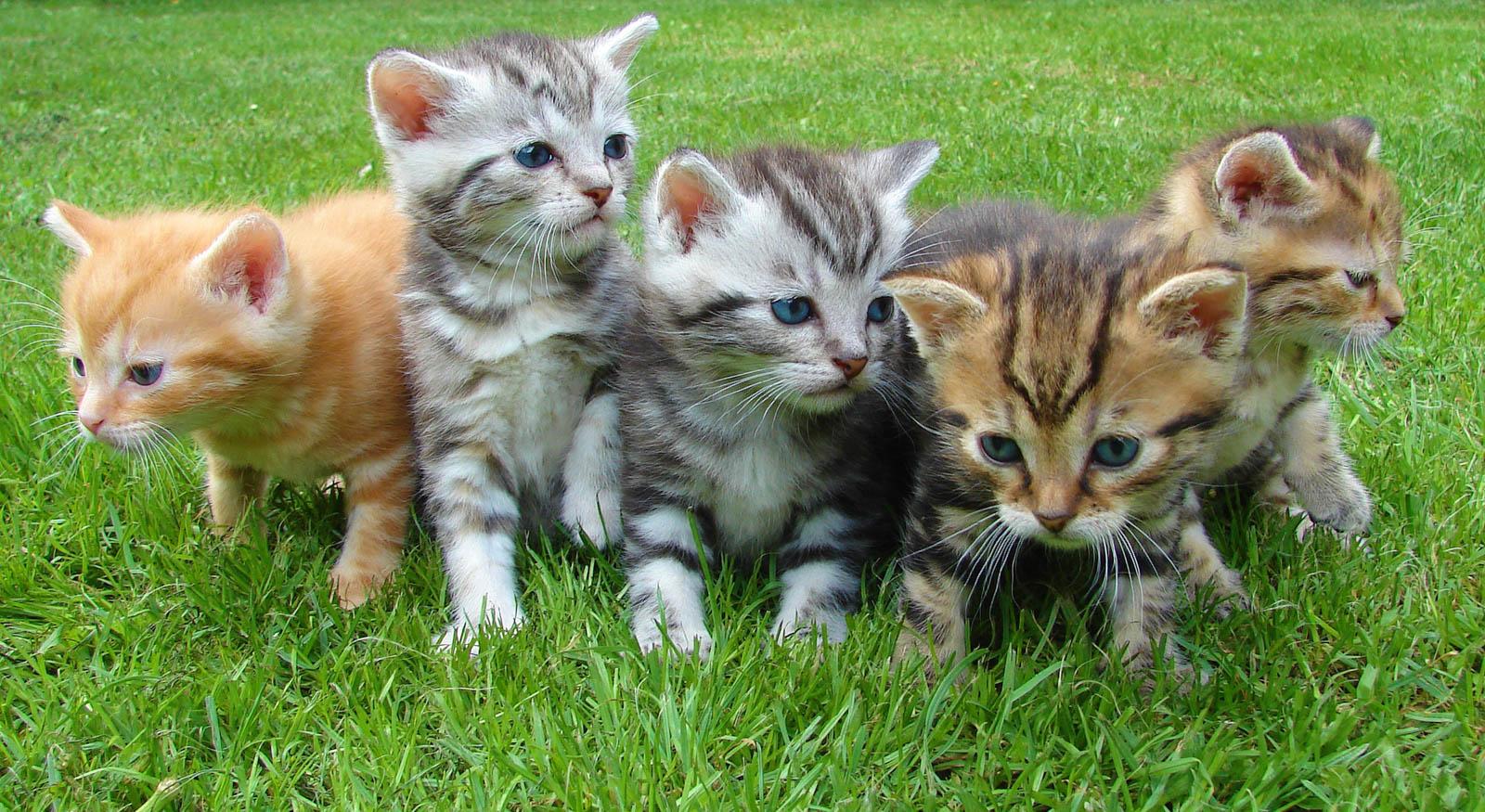 we-found-kittens