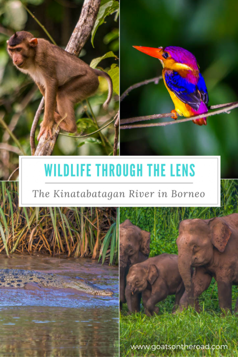 wildlife-through-the-lens