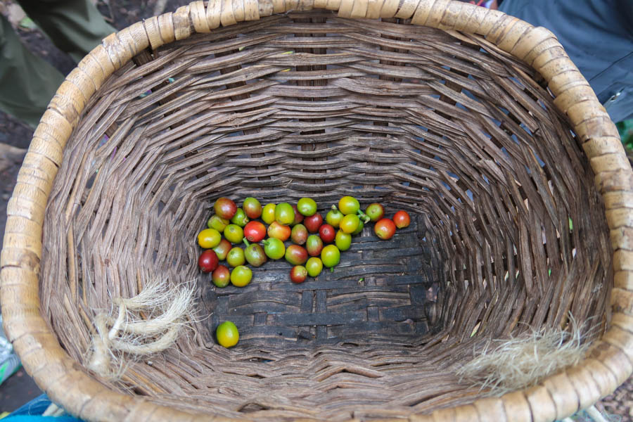 travelling to salento colombia coffee farm