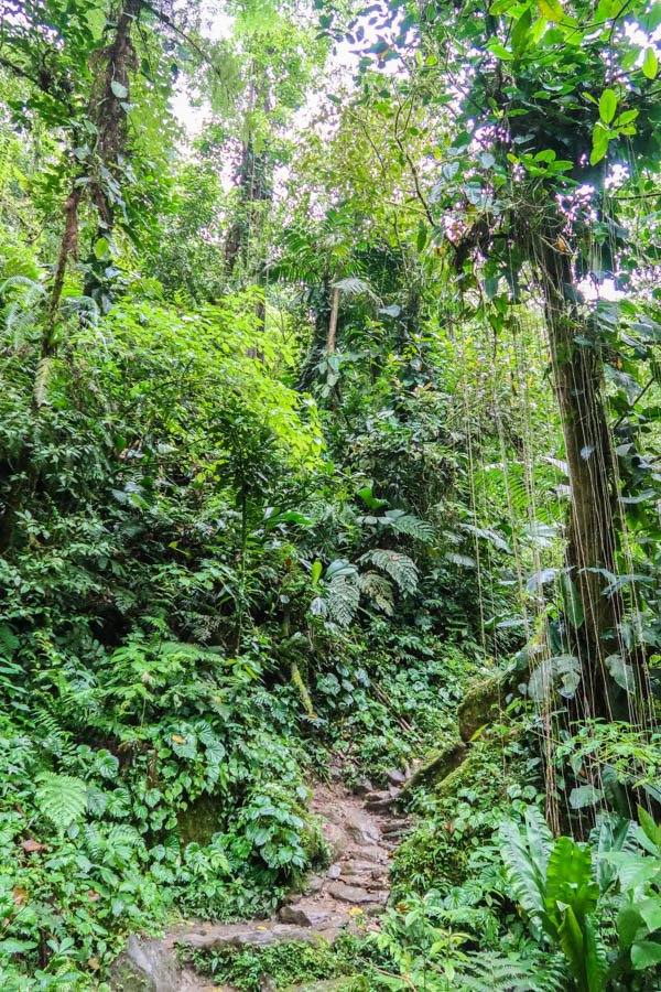 hiking the ciudad perdida in colombia