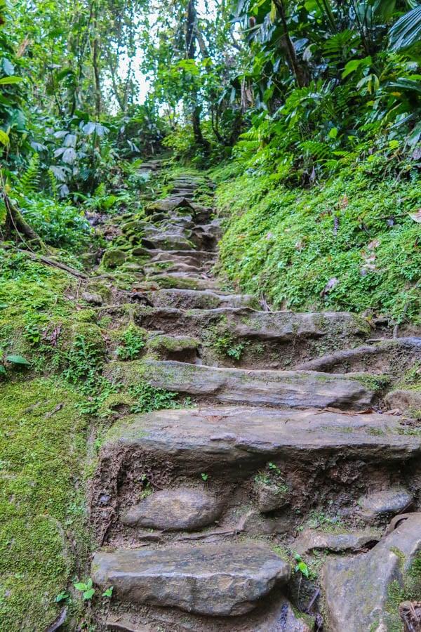 hiking the ciudad perdida