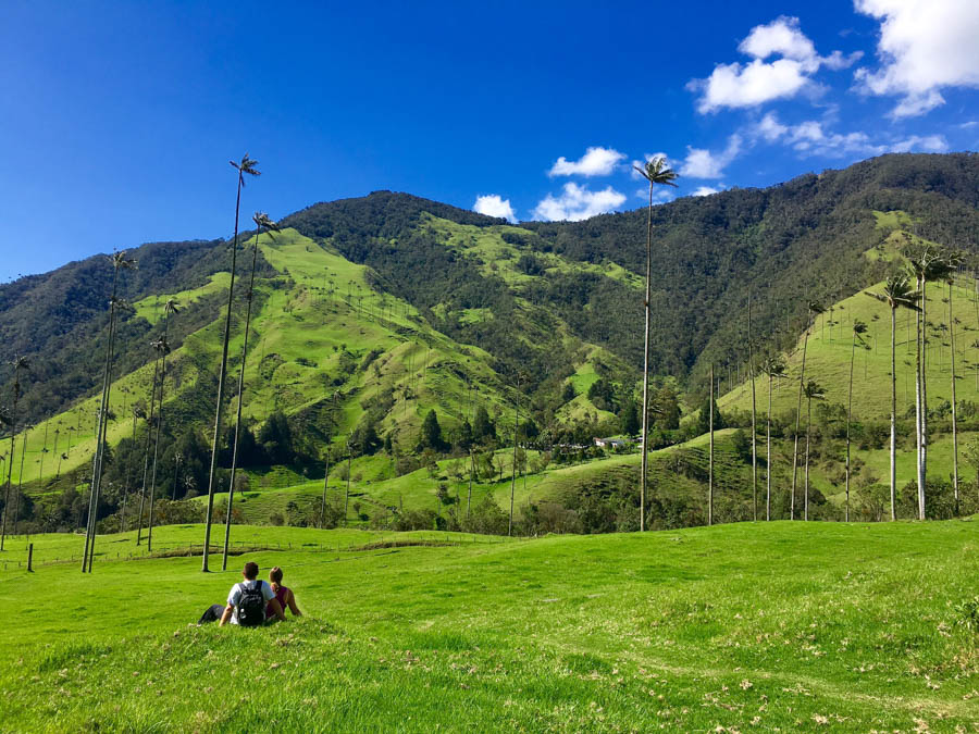 trees-at-the-valle-de-cocora