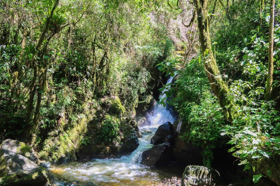 travel to salento colombia valle de cocora