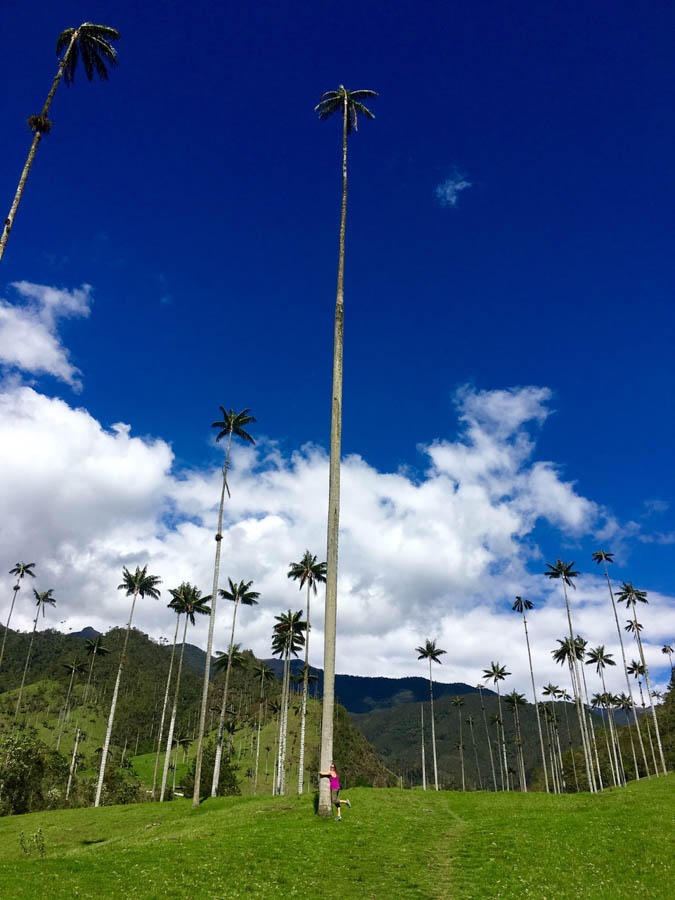 hiking the cocora valley in salento colombia