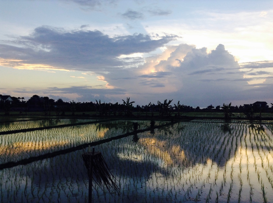 Beautiful Rice Fields in Bali - Travel for Your Life