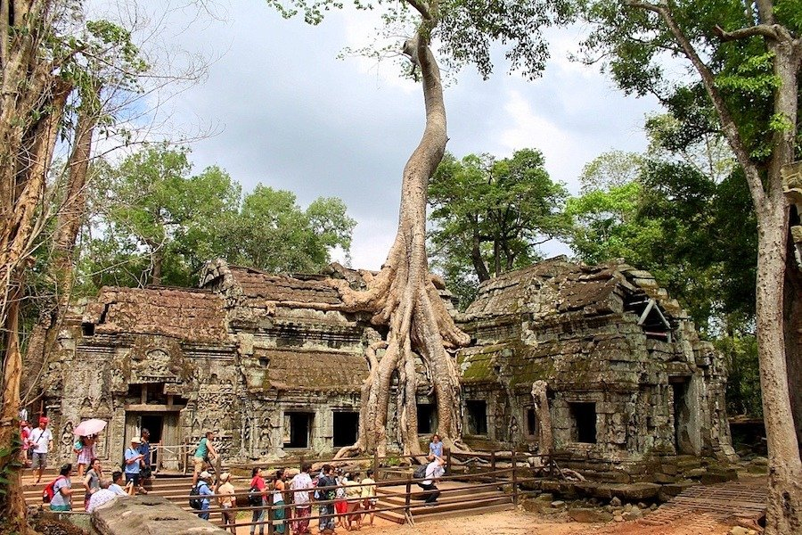angkor temple trees
