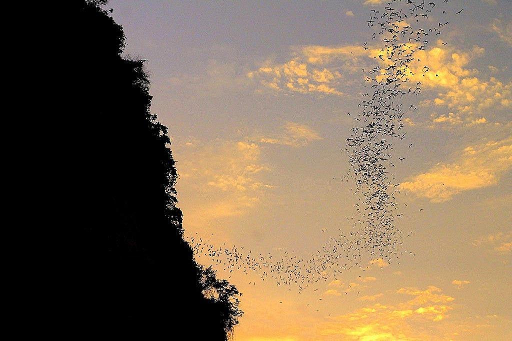 bat cave, Cambodia