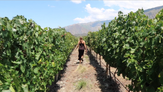 Cafayate Wine Road Trip