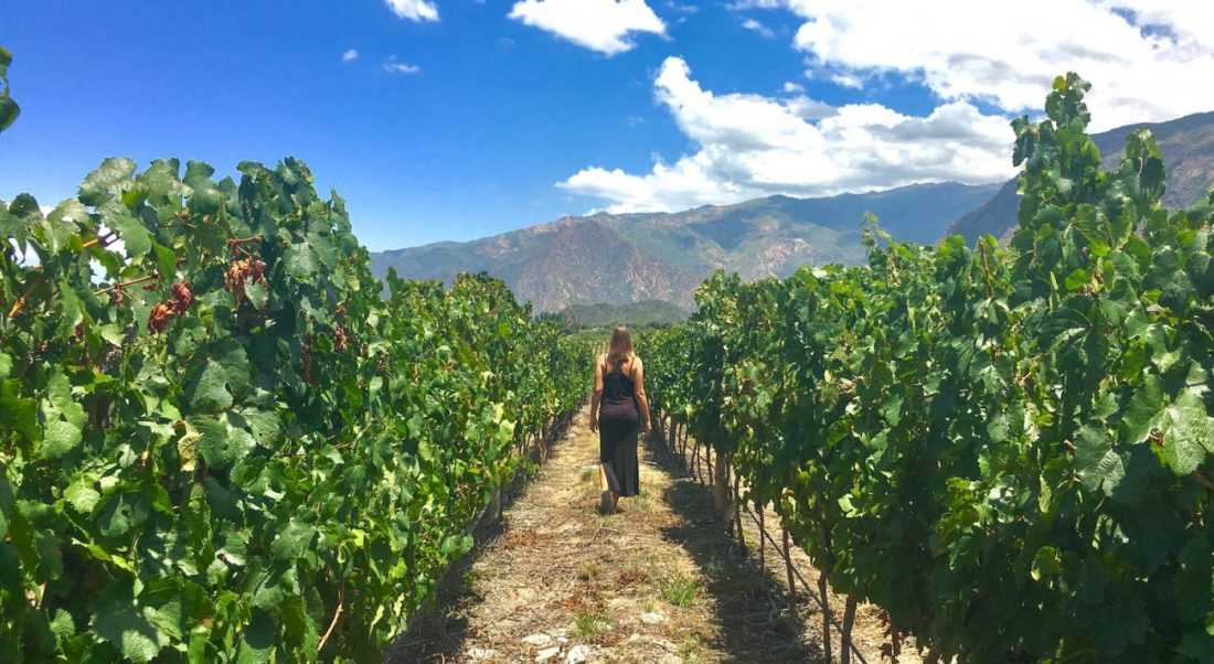 working on a vineyard is a great way to get paid to travel the world