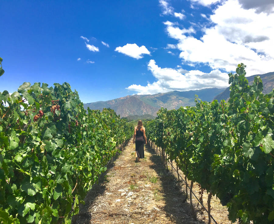 travel to cafayate argentina piattelli vineyard