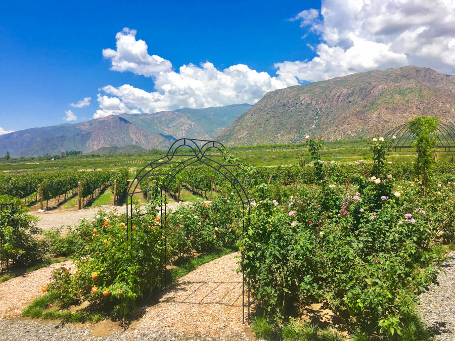 travel to cafayate argentina visit piattelli vineyard