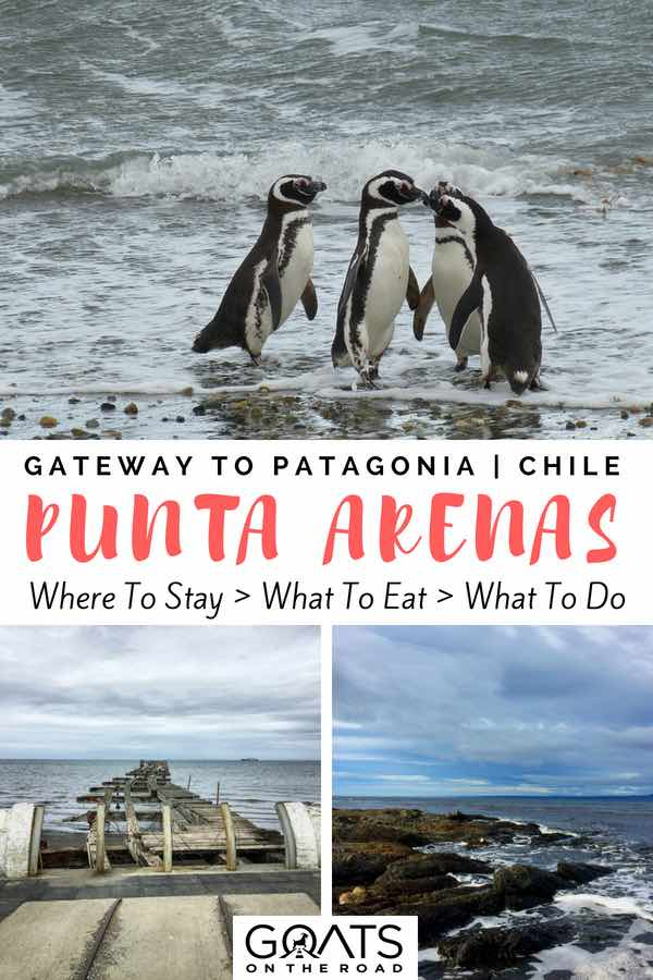 Penguins in Chile with text overlay Gateway To Patagonia Punta Arenas