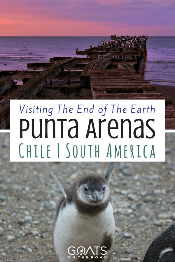 Sunset on pier & baby penguin with text overlay Visiting The End of The Earth Punta Arenas