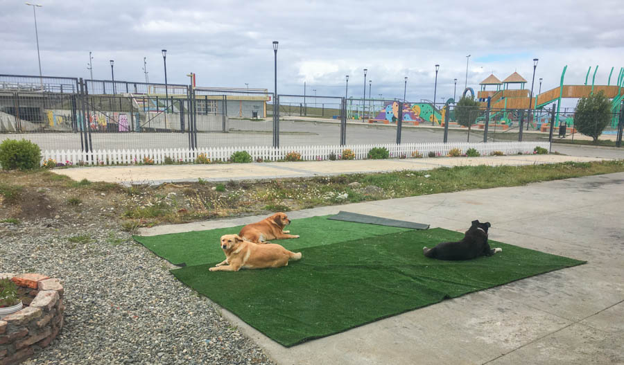travel to punta arenas chile dogs