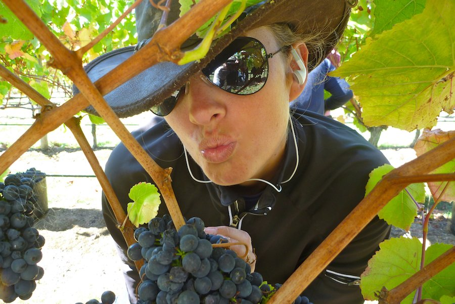 how to make money working on a vineyard as a grape picker