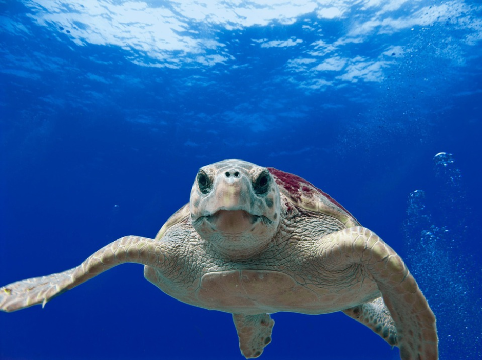 Things To Do in Zakynthos Snorkel With Turtles