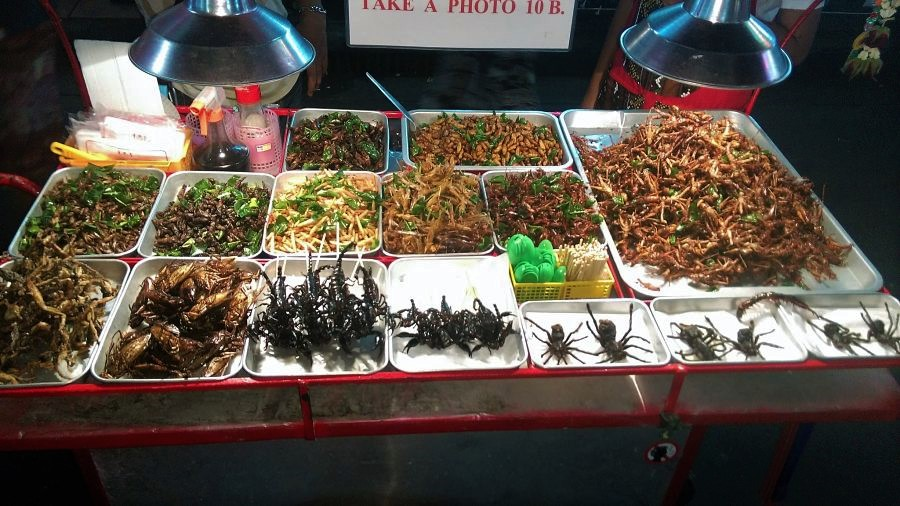 Things to do in Chiang Mai-insects-thai food-eat
