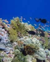 Scuba Diving in Alor – The Ultimate Diver's Guide
