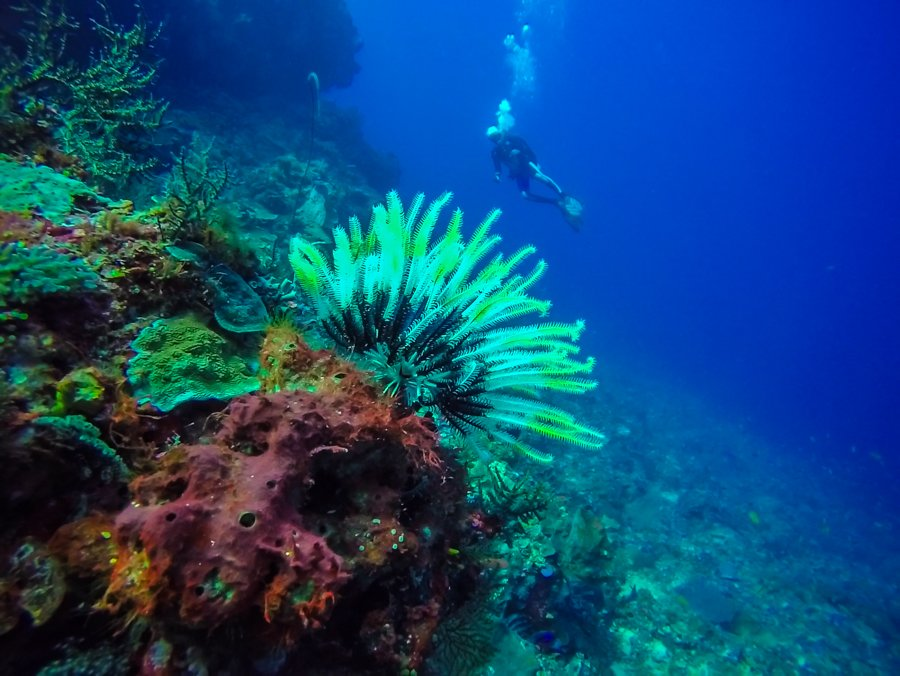 Cost of Scuba Diving in Alor Indonesia