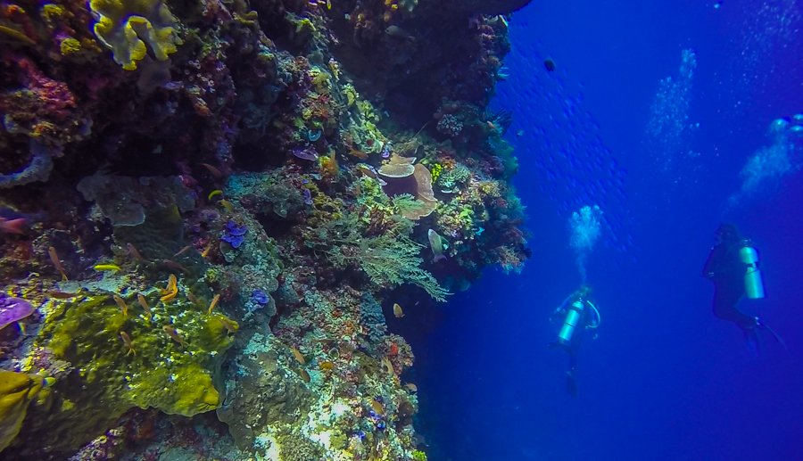 Scuba Diving in Alor Healthy Coral Life
