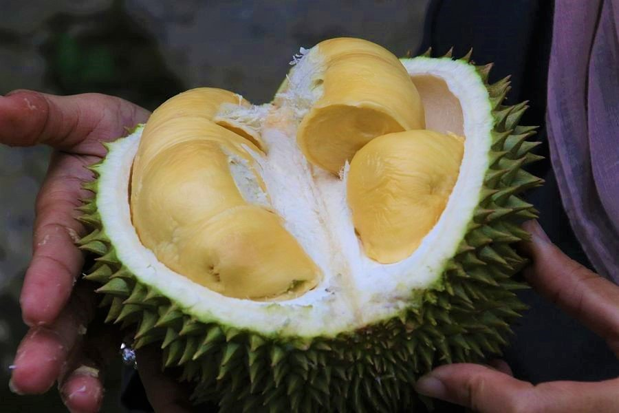 Things to do in Chiang Mai-durian-fruit-thailand