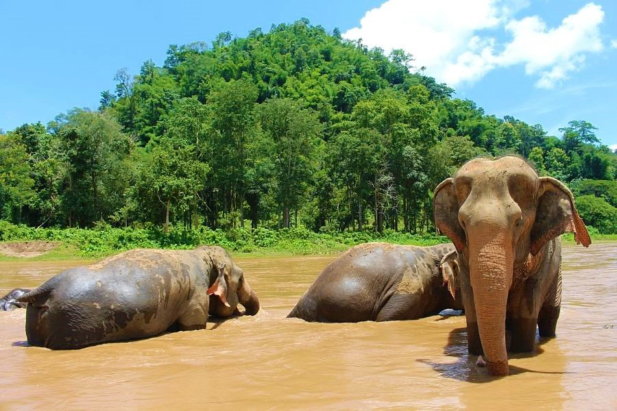 Things to do in Chiang Mai-thailand-elephants