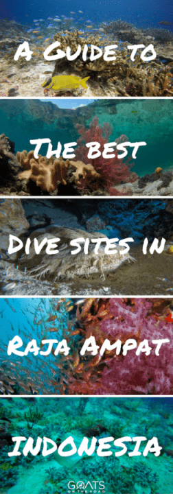A Guide To The Best Dive Sites in Raja Ampat Indonesia