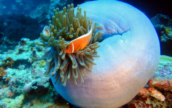 Clown Fish at the Manila Ocean Park - Top 8 places to visit in Manila
