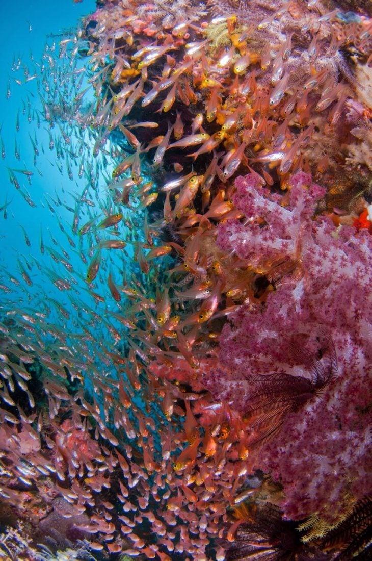 Diving In Raja Ampat Melissa's Garden