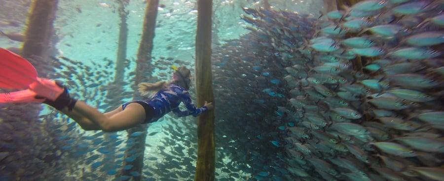 Diving Raja Ampat Best Dive Sites Arborek Jetty