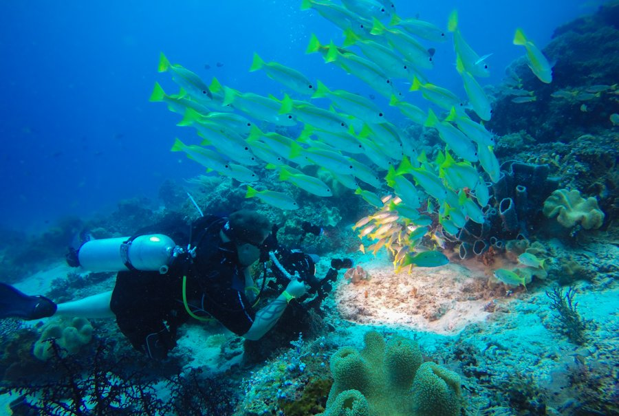 Diving Raja Ampat Best Dive Sites