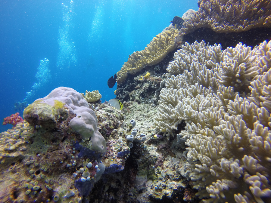 Diving Raja Ampat Coral Reefs