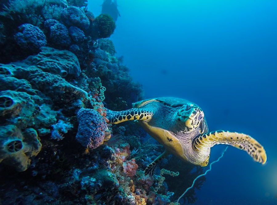 be a responsible traveller when scuba diving