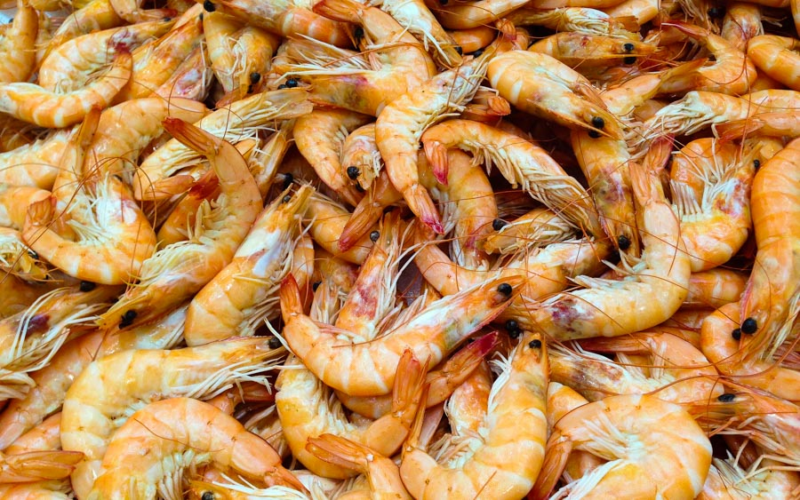 Pangkor Shrimps - The top 10 best malaysian islands
