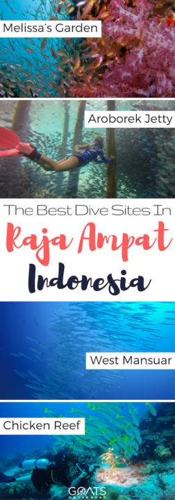 The Best Dive Sites In Raja Ampat Indonesia
