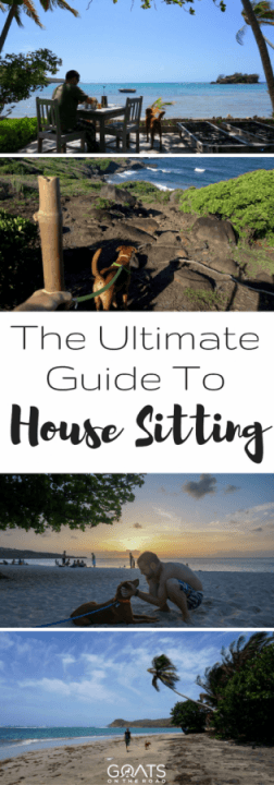 How To Join Trusted House Sitters & Get Your First House Sitting Job